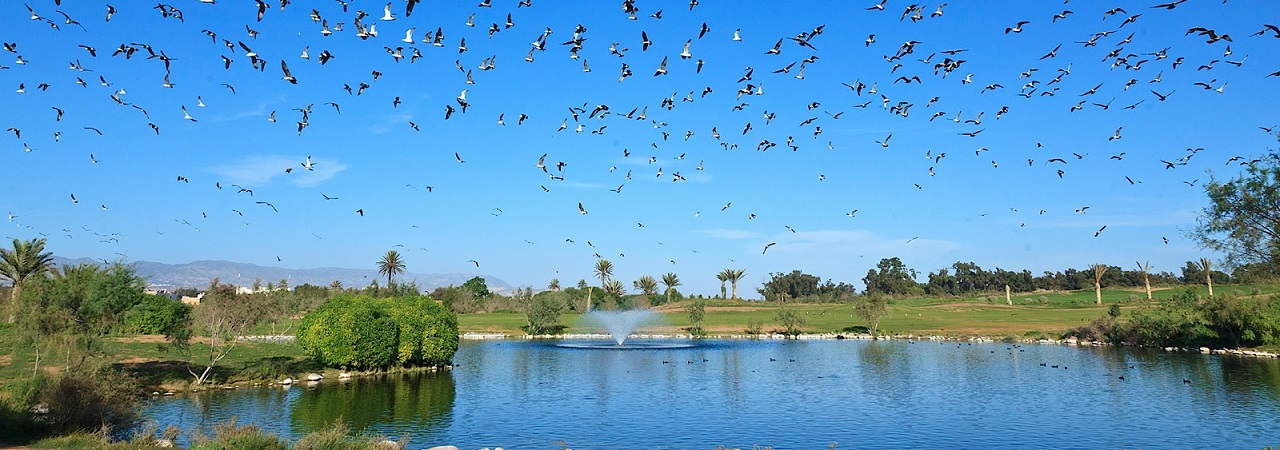 Golf Le Ocean - Marokko